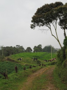 La Vista De Aqui - Medellin - 10